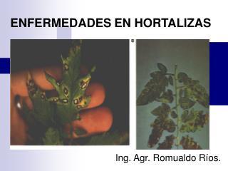 ENFERMEDADES EN HORTALIZAS
