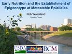Early Nutrition and the Establishment of Epigenotype at Metastable Epialleles