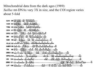 Mitochondrial data from the dark ages 1989: Suillus mt-DNAs vary 3X in size, and the COI region varies about 5-fold