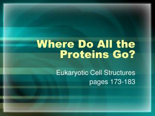 Where Do All the Proteins Go