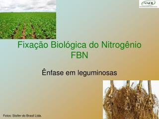 Fixa  o Biol gica do Nitrog nio  FBN