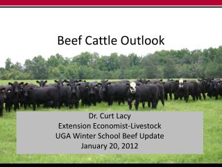 Beef Cattle Outlook