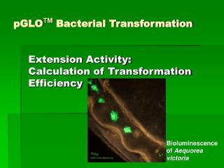 PGLOTM Bacterial Transformation