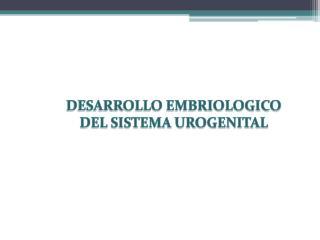 DESARROLLO EMBRIOLOGICO DEL SISTEMA UROGENITAL