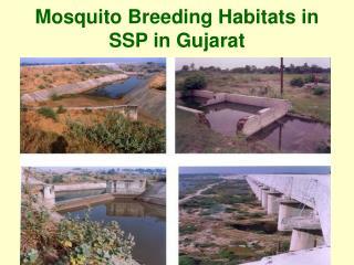 Mosquito Breeding Habitats in SSP in Gujarat