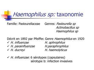 Haemophilus sp: taxonomie