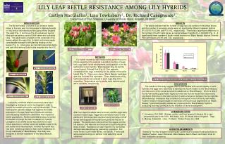 LILY LEAF BEETLE RESISTANCE AMONG LILY HYBRIDS