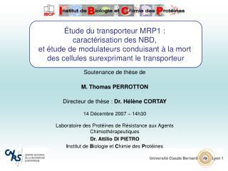 tude du transporteur MRP1 :  caract risation des NBD,  et  tude de modulateurs conduisant   la mort  des cellules surex