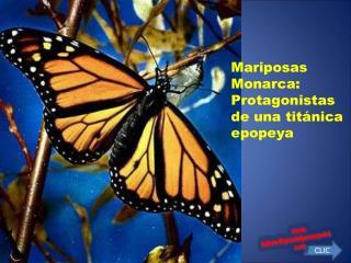 Mariposas Monarca: Protagonistas de una tit nica epopeya