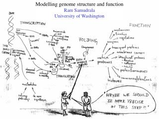Modelling genome structure and function Ram Samudrala University of Washington