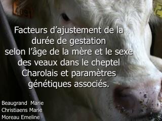Facteurs d ajustement de la dur e de gestation  selon l  ge de la m re et le sexe des veaux dans le cheptel Charolais et