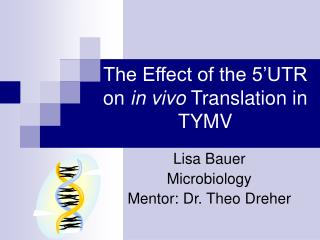 The Effect of the 5 UTR on in vivo Translation in TYMV