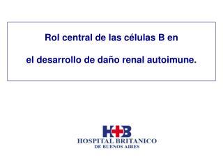 Rol central de las c lulas B en  el desarrollo de da o renal autoimune.
