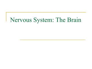 Nervous System: The Brain