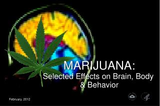 MARIJUANA: Selected Effects on Brain, Body   Behavior