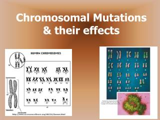 Chromosomal Mutations  their effects