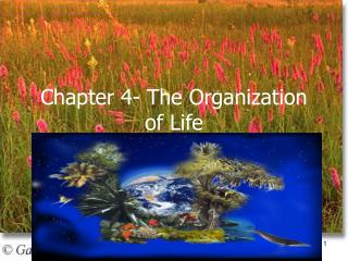 Chapter 4- The Organization of Life