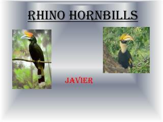 Rhino Hornbills