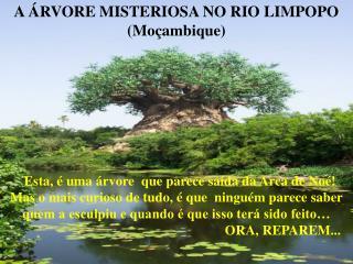 A  RVORE MISTERIOSA NO RIO LIMPOPO Mo ambique