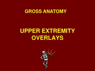 UPPER EXTREMITY OVERLAYS