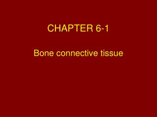 Bone connective tissue