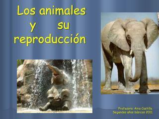 Los animales y      su  reproducci n