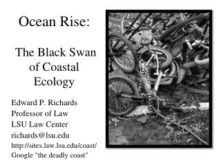 Ocean Rise:   The Black Swan of Coastal Ecology