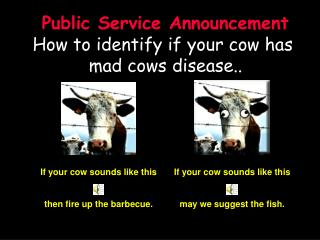 If your cow sounds like this   then fire up the barbecue.