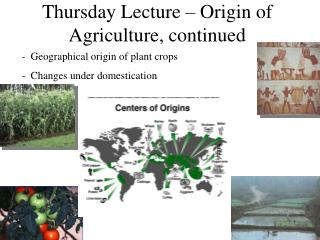 Thursday Lecture   Origin of Agriculture, continued