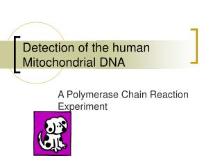 Detection of the human Mitochondrial DNA