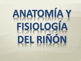 ANATOM A Y FISIOLOG A DEL RI  N