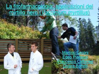 La fitofarmacologia: applicazioni del mirtillo nero Vaccinium myrtillus