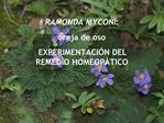 RAMONDA MYCONI:  oreja de oso EXPERIMENTACI N DEL REMEDIO HOMEOP TICO