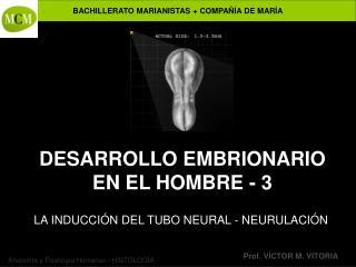 DESARROLLO EMBRIONARIO EN EL HOMBRE - 3