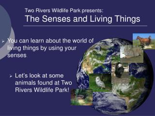 Two Rivers Wildlife Park presents: The Senses and Living Things