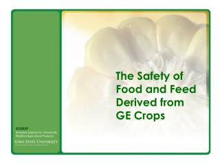 The Safety of  Food and Feed  Derived from  GE Crops
