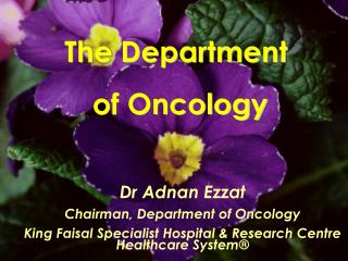 The Department  of Oncology