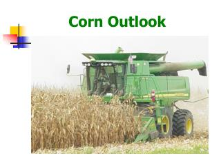 Corn Outlook