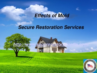 Effects of Mold