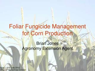 Foliar Fungicide Management for Corn Production