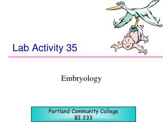 Lab Activity 35