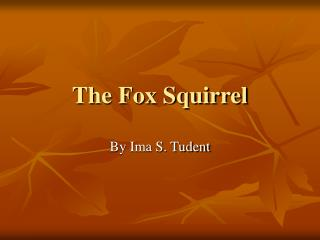 The Fox Squirrel