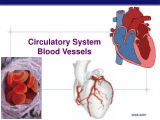 Circulatory System Blood Vessels
