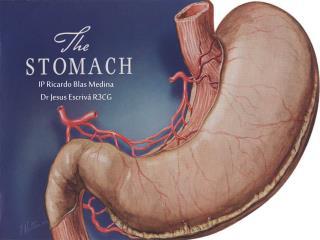 Anatom a