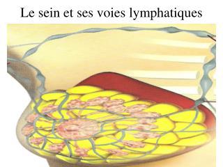 Le sein et ses voies lymphatiques