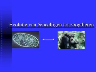 Evolutie van   ncelligen tot zoogdieren