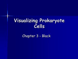 Visualizing Prokaryote Cells
