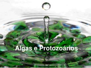 Algas e Protozo rios