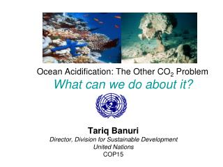 Ocean Acidification: The Other CO2 Problem What can we do about it