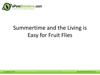 Summertime and the Living is Easy for Fruit Flies